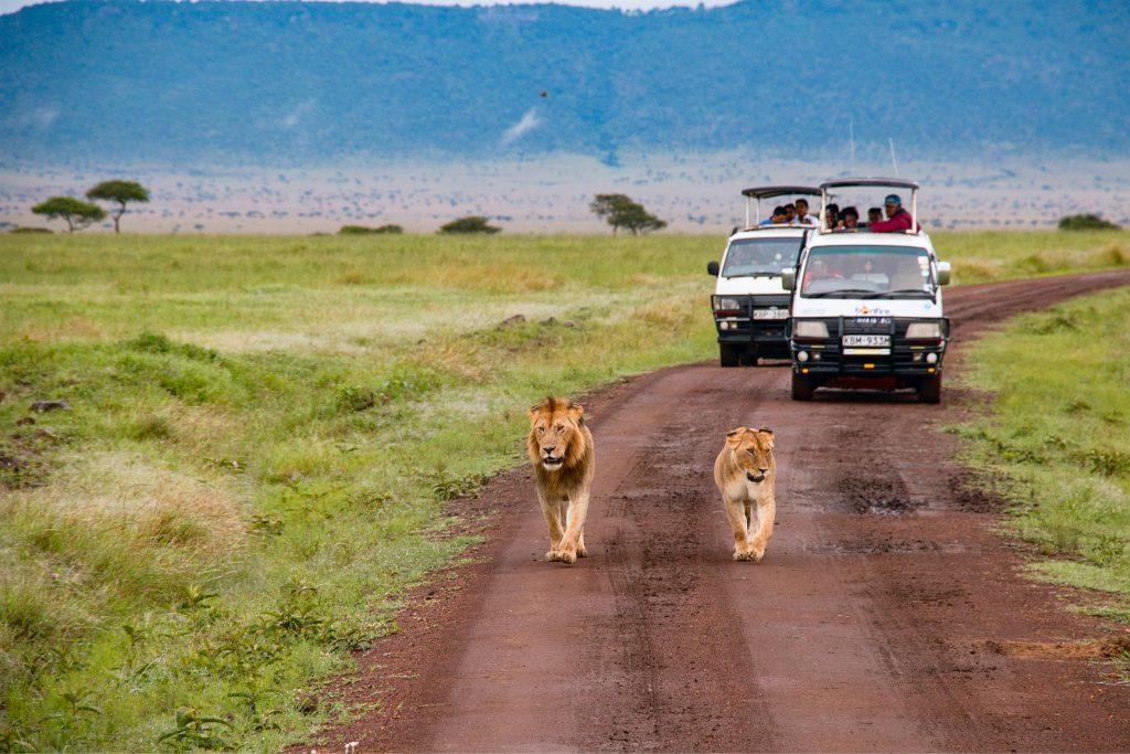 Safari-in-Kenia-Masai-Mara